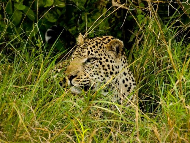 We managed to get just ten feet from this leopard!